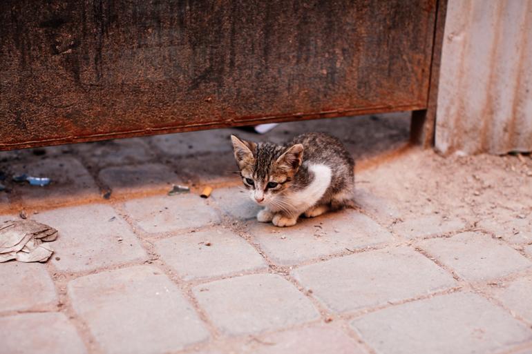 Style-Shiver-Travel-Marrakesh-48